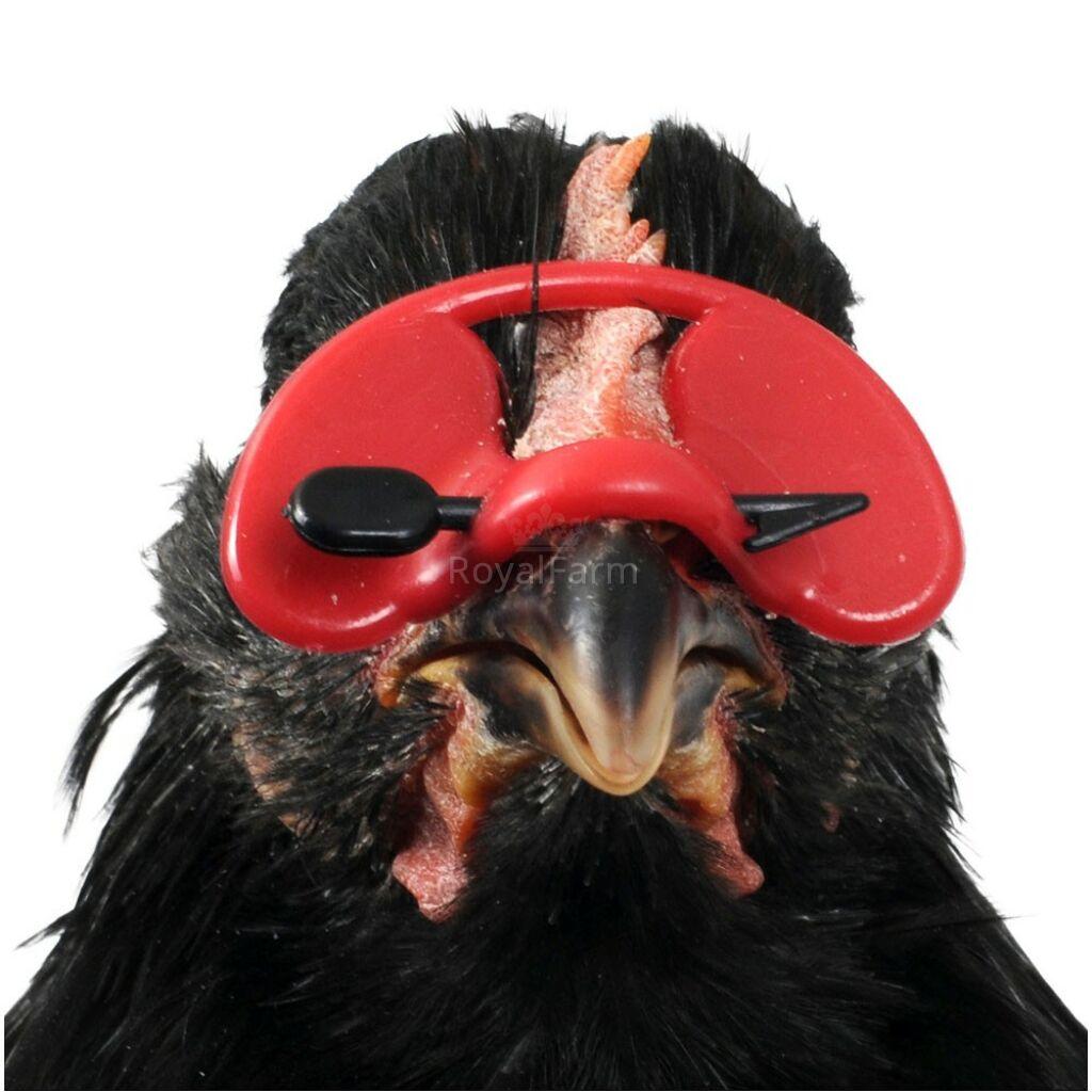 Baromfi szemüveg